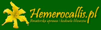Liliowce (hemerocallis) – piękności dnia